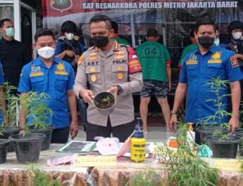 Satuan Narkoba Polres Metro Jakarta Barat, Rilis Kebun Ganja Rumahan